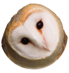 Owl head1